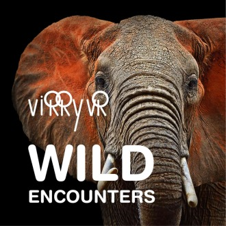 Virry VR: Wild Encounters PS4