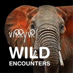 Virry VR : Wild Encounters