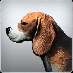 Beagle Avatar