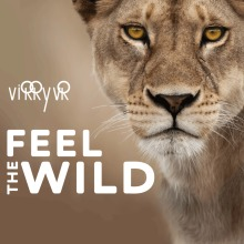 Virry VR: Feel the Wild(English Ver.)