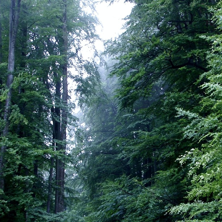Audio Theme Series Relaxing Forest and Rain Sound