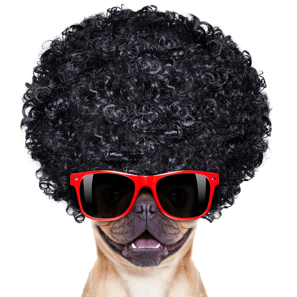 Cool Afro Dog HiQ Avatar