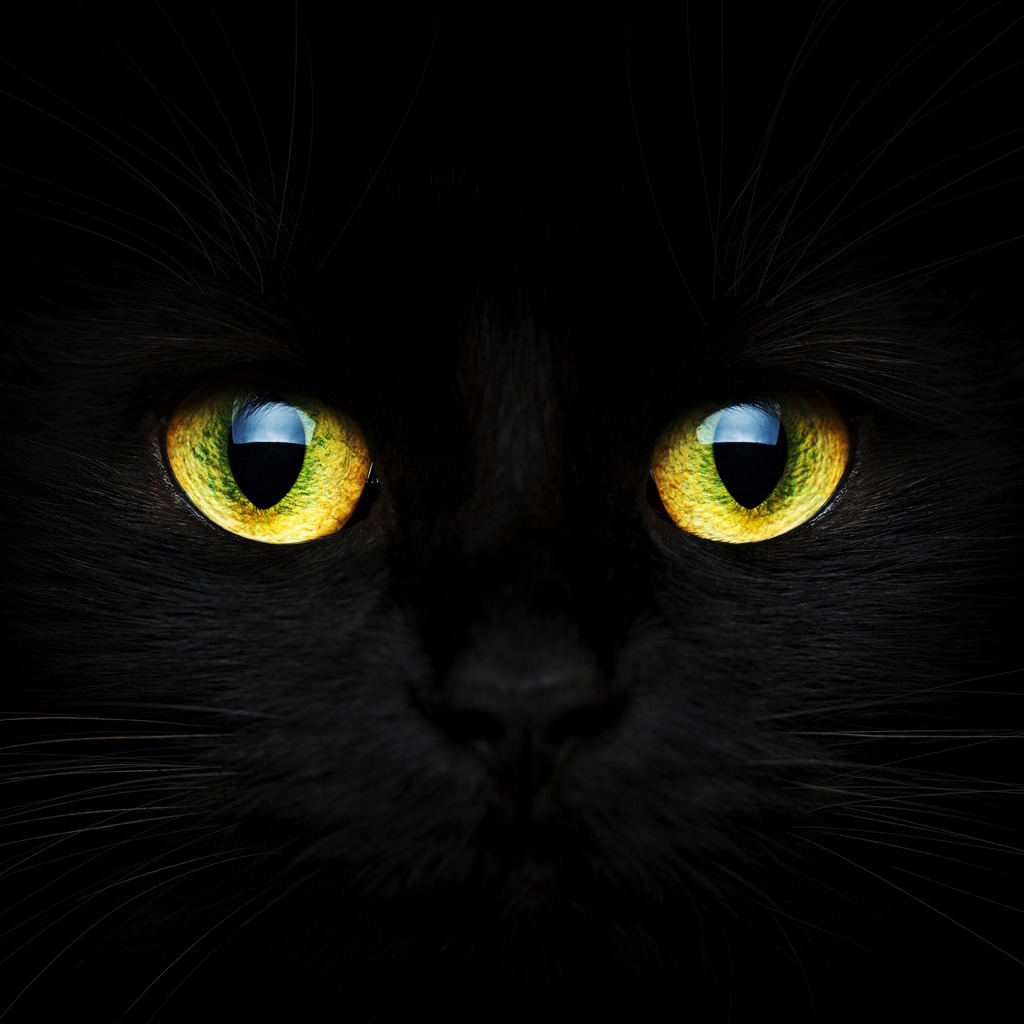 Black Cat Eyes HiQ Avatar