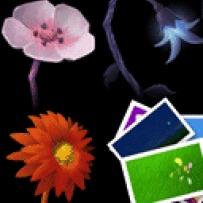 Flower® Avatar Bundle